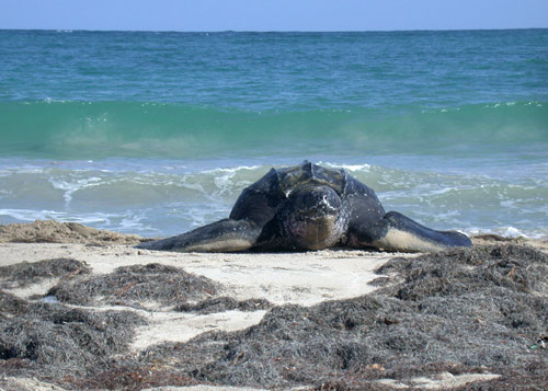 turtle at sandy beach